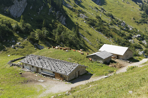 Germany, Bavaria, Mangfall Mountains, Mountain farm with cows - SIE005155
