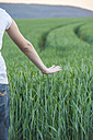 Germany, Rhineland-Palatinate, Hand touching wheat field in early summer - PAF000554