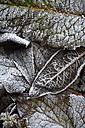 Frozen autumn foliage, partial view - AXF000664