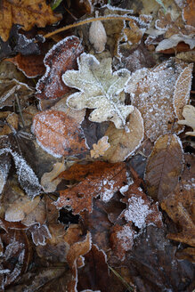 Autumn foliage with hoarfrost, partial view - AXF000632