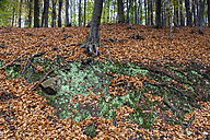 Germany, Fuldabruck, Leaves in forest - SR000450