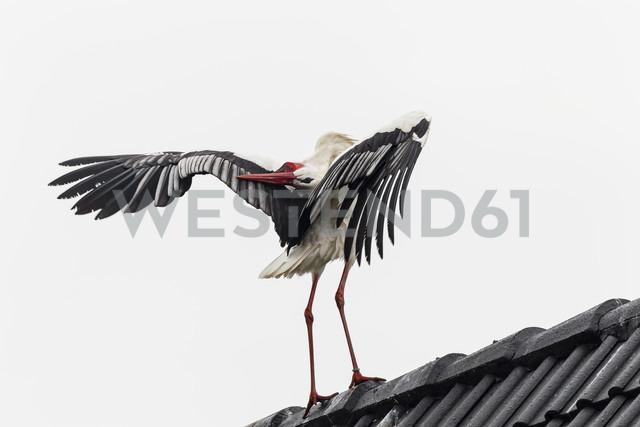 Germany, Stork on roof - SR000454