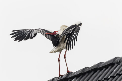 Germany, Stork on roof - SR000454