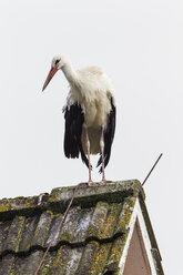 Germany, Stork on roof - SR000456