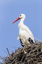 Germany, Stork nesting on roof - SR000457