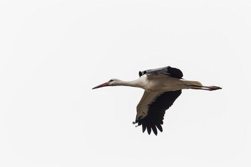 Germany, Flying stork - SR000400