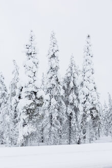 Finland, Snow-capped trees - SR000393