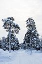 Finland, Saariselkae, Snow-capped trees - SR000391
