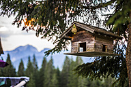 Austria, Gosau, bird house in tree - KVF000089