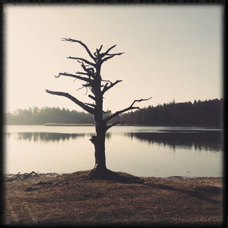 Surreal Tree, Fohnsee, Osterseen, Iffeldorf, Bavaria, Deustchland - GSF000845