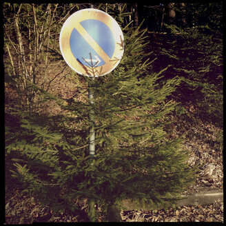 No Stopping, Tree, Iffeldorf, Bavaria Germany - GSF000842