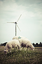 Germany, Hamburg, wind wheel and sheeps on meadow - KRPF000375