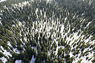 Canada, British Columbia, Rocky Mountains at Mt Seymour Provincial Park - AMF002031