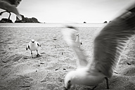 New Zealand, North Island, Cathedral Cove and seagulls on beach - WV000479