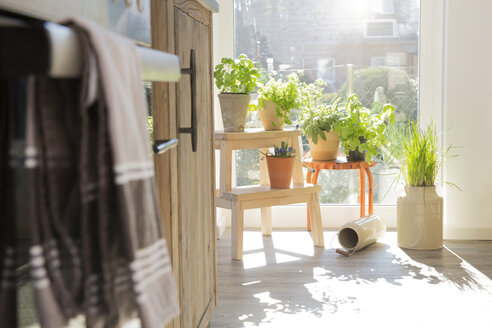 Herbs in flowerpots at the kitchen window - FKF000470