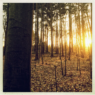 Sunrise in the forest of the Harburg Hills Hamburg, Germany - MSF003495
