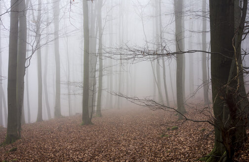 Germany, Hesse, fog in the nature park Taunus - ATAF000036