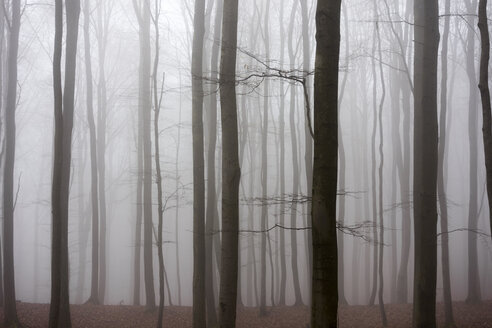 Germany, Hesse, fog in the nature park Taunus - ATAF000033