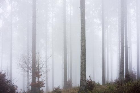 Germany, Hesse, fog in the nature park Taunus - ATAF000032