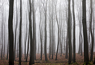 Germany, Hesse, fog in the nature park Taunus - ATAF000029
