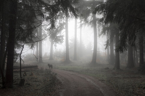 Germany, Hesse, fog in the nature park Taunus - ATAF000026