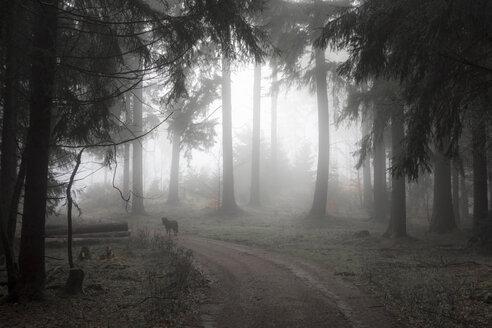Germany, Hesse, fog in the nature park Taunus - ATAF000026