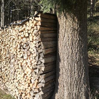 Woodpile, webs, Breisgau in the Black Forest, Germany - DRF000597
