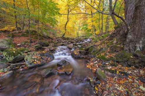 Germany, Saxony-Anhalt, Harz National Park in autumn - RJF000050