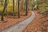 Germany, Mecklenburg-Western Pomerania, forest path in autumn - RJF000054