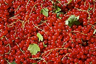 Redcurrants (Ribes rubrum), close-up - HAWF000004