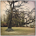 Bench in front of an old tree, Tutzing, Bavaria, Germany - GS000866