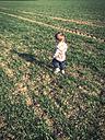 Toddler Boy walking in the fields, Sangerhausen, Germany - ABA001288