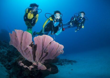 Philippines, Pacific Ocean, Divers at elephant ear sponge (Ianthella basta) - JWA000031