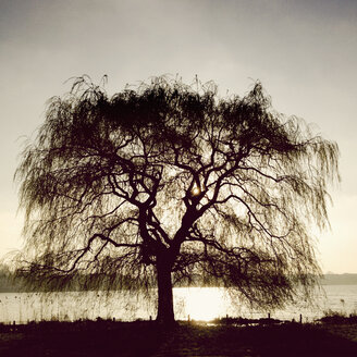 Outer Alster Lake in the morning light, tree in backlight, Hamburg, Germany - MSF003683
