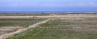 Germany, North Friesian Islands, Sylt, Salt marsh near Morsum - ATAF000053