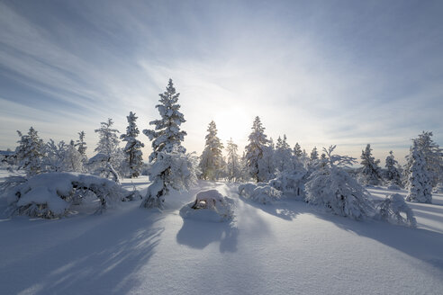 Finnland, near Saariselka, Snow covered trees - SR000475