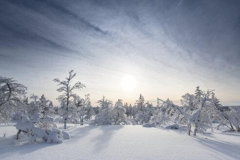 Finnland, near Saariselka, Snow covered trees - SR000473