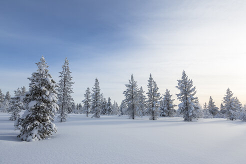 Finnland, near Saariselka, Snow covered trees - SR000471