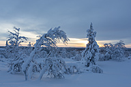 Finnland, near Saariselka, Snow covered trees - SR000467