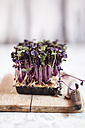 Plastic container of purple radish cress on wooden board with knife - SBDF000752