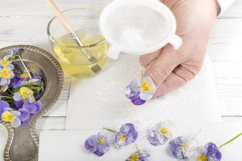 Sugaring pansies with powdered sugar - CSTF000225