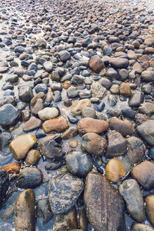 New Zealand, Golden Bay, pebbles at  beach - WV000632