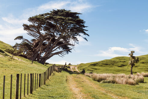 New Zealand, Golden Bay, view to tilted big old trees at Cape Farewell - WV000634