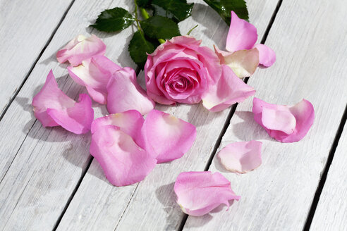 Pink rose and petals on wooden table - CSF021208