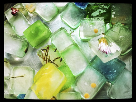 colored ice cubes with red lentils and various flowers, studio, experiment with children - MYF000288