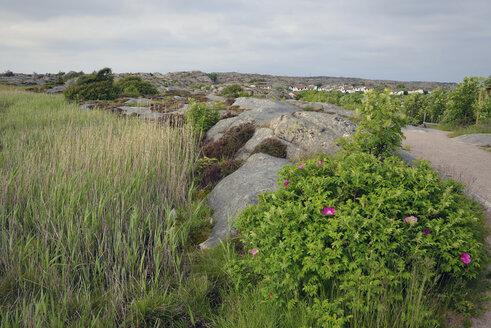 Sweden, Kungshamn, Skerry landscape - BR000210