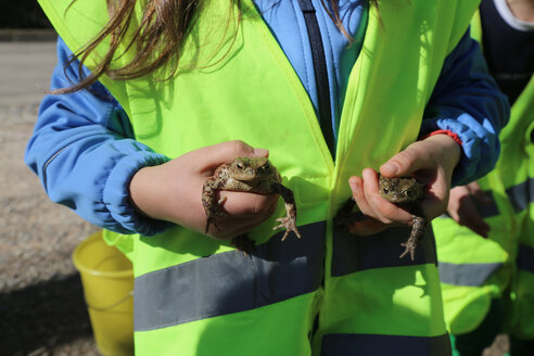 Germany, Freiburg, Girl holding toads during rescue operation - DHL000397