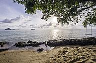 Thailand, Koh Phi Phi Don, Swing on a tree at beach - THA000246