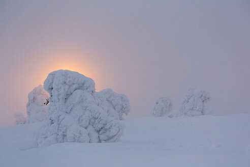 Scandinavia, Finland, Kittilae, Snow-covered pines against the light in the evening - SR000513