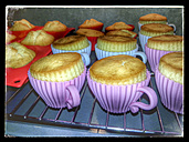 Cup cakes, cup shape, muffins, oven, Studio - CSF021252